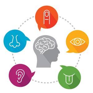 Bilde av Workshop i sanseintegrasjon