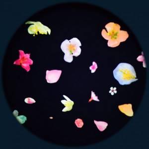 Bilde av Solar effekthjul blomster